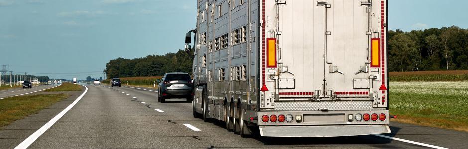 Livestock transport truck