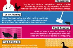 Avian Influenza campaign poster image