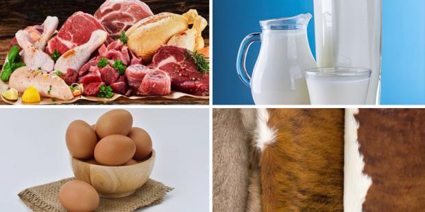 Images of minced meat, milk and animal hides