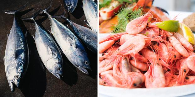 Images of fish catch and seafood