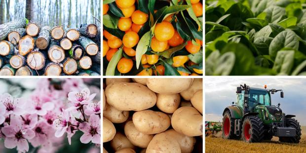 Images of cut flowers, potatoes and greenhouse plants