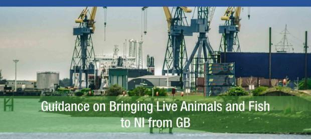 Guidance on bringing live animals and fish to NI from GB
