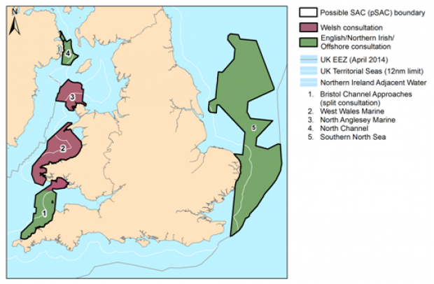 Special Areas of Conservation for Harbour porpoise