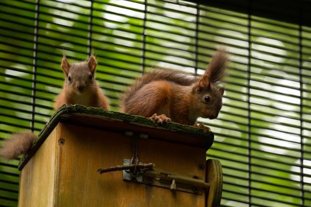 Belfast Zoo babies