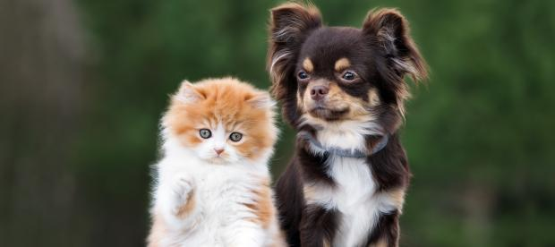 Image of a kitten and puppy
